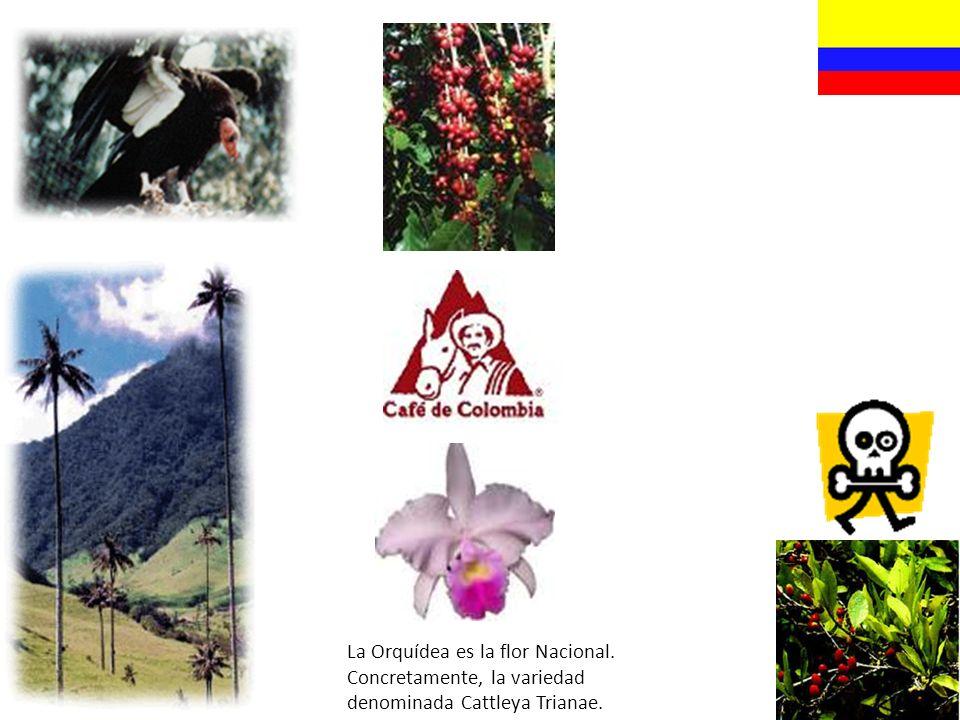 La Orquídea es la flor Nacional.