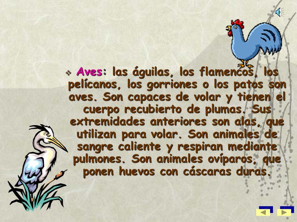 Aves: las águilas, los flamencos, los pelícanos, los gorriones o los patos son aves.