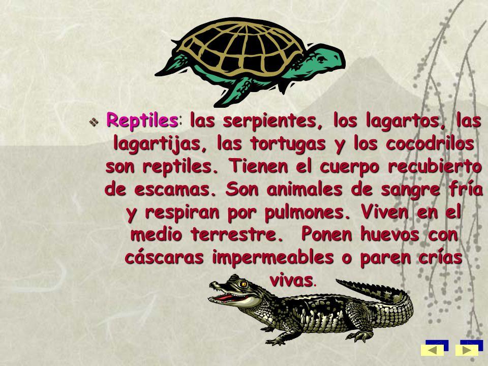 Reptiles: las serpientes, los lagartos, las lagartijas, las tortugas y los cocodrilos son reptiles.