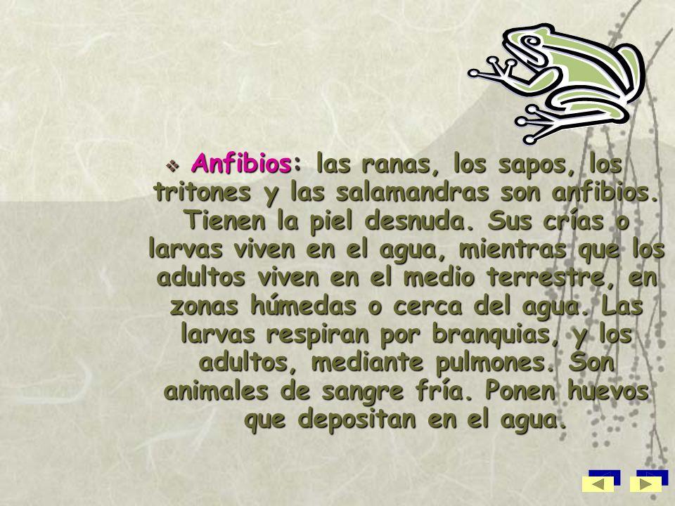 Anfibios: las ranas, los sapos, los tritones y las salamandras son anfibios.