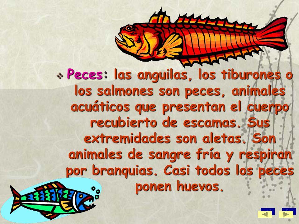 Peces: las anguilas, los tiburones o los salmones son peces, animales acuáticos que presentan el cuerpo recubierto de escamas.
