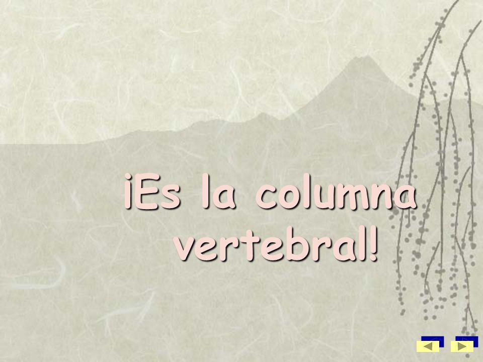 ¡Es la columna vertebral!