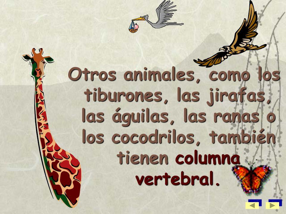 Otros animales, como los tiburones, las jirafas, las águilas, las ranas o los cocodrilos, también tienen columna vertebral.