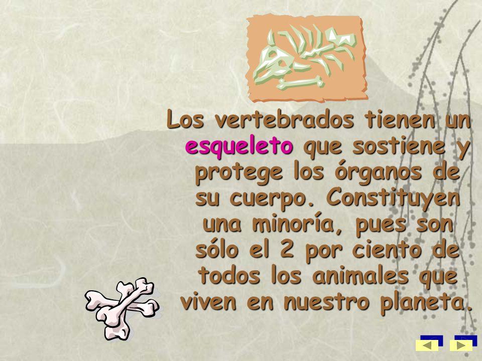 Los vertebrados tienen un esqueleto que sostiene y protege los órganos de su cuerpo.