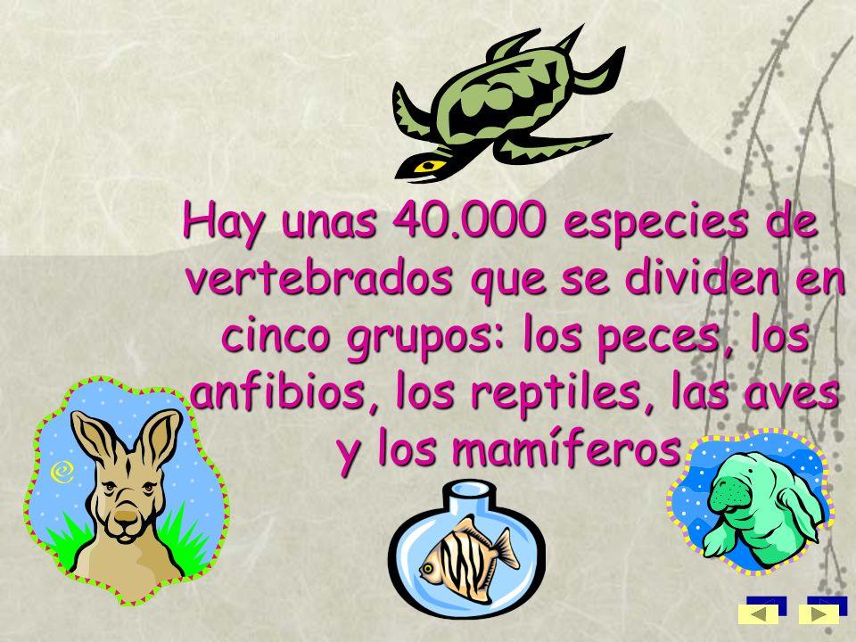 Hay unas 40.000 especies de vertebrados que se dividen en cinco grupos: los peces, los anfibios, los reptiles, las aves y los mamíferos.