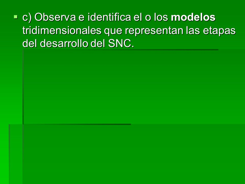 c) Observa e identifica el o los modelos tridimensionales que representan las etapas del desarrollo del SNC.