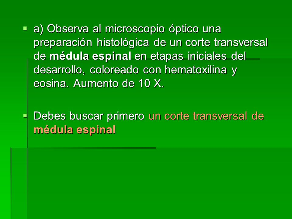 a) Observa al microscopio óptico una preparación histológica de un corte transversal de médula espinal en etapas iniciales del desarrollo, coloreado con hematoxilina y eosina. Aumento de 10 X.