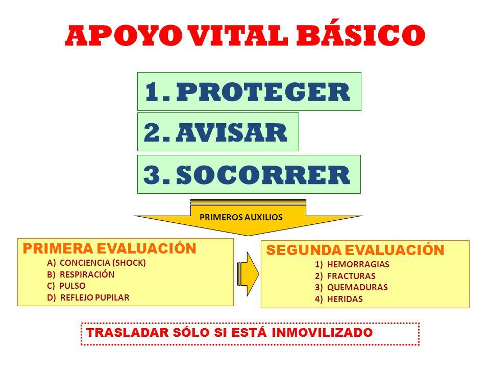 APOYO VITAL BÁSICO 1. PROTEGER 2. AVISAR 3. SOCORRER