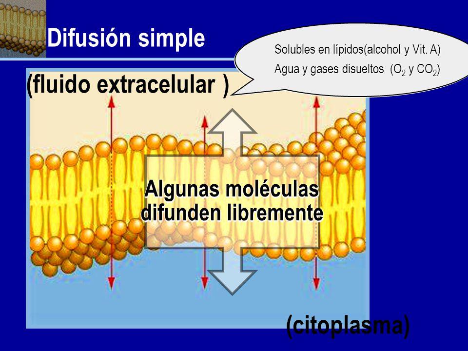 Algunas moléculas difunden libremente