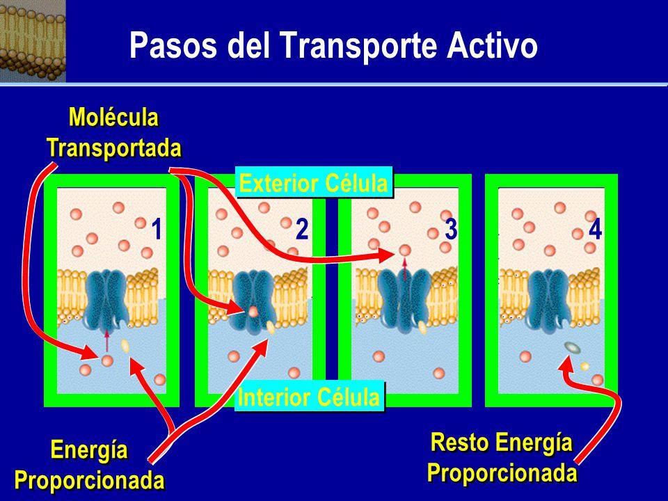 Pasos del Transporte Activo
