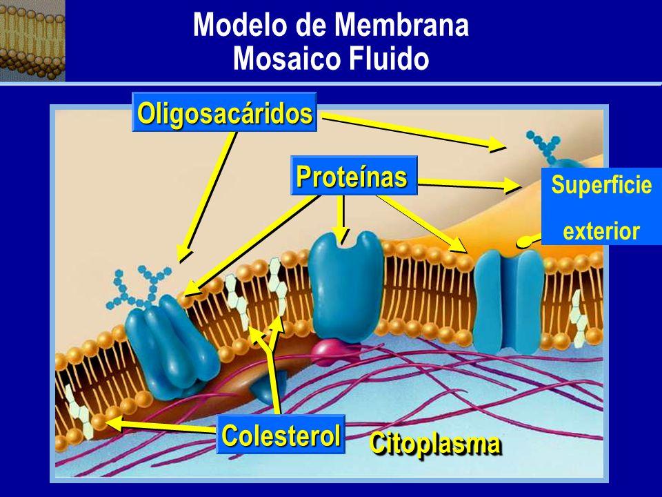 Modelo de Membrana Mosaico Fluido