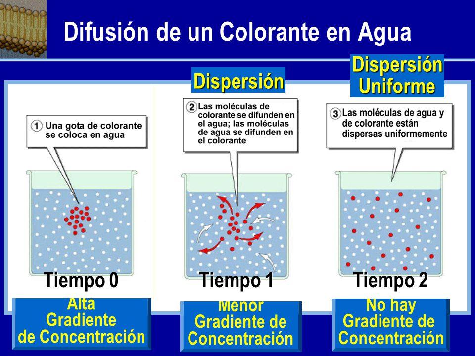 Difusión de un Colorante en Agua
