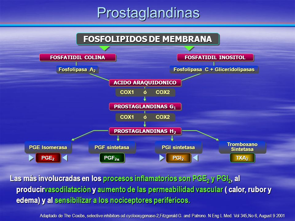 FOSFOLIPIDOS DE MEMBRANA Fosfolipasa C + Gliceridolipasas