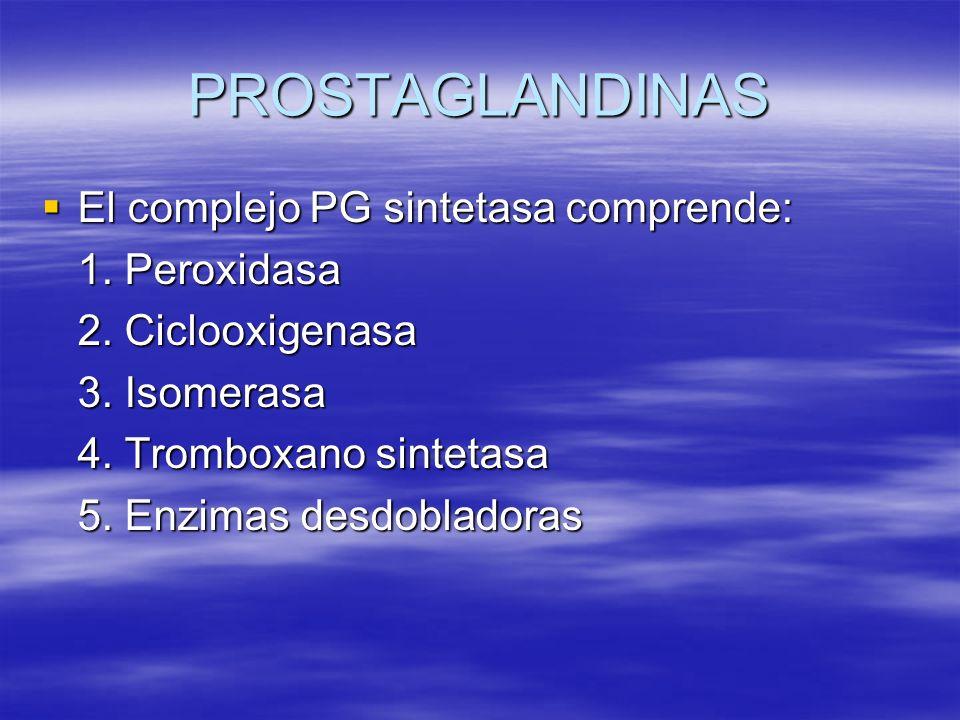 PROSTAGLANDINAS El complejo PG sintetasa comprende: 1. Peroxidasa