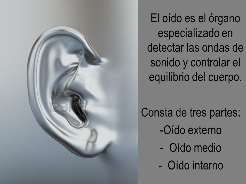 El oído es el órgano especializado en detectar las ondas de sonido y controlar el equilibrio del cuerpo.