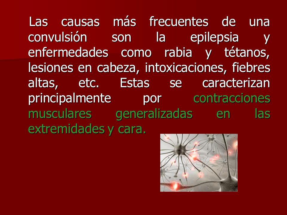 Las causas más frecuentes de una convulsión son la epilepsia y enfermedades como rabia y tétanos, lesiones en cabeza, intoxicaciones, fiebres altas, etc.