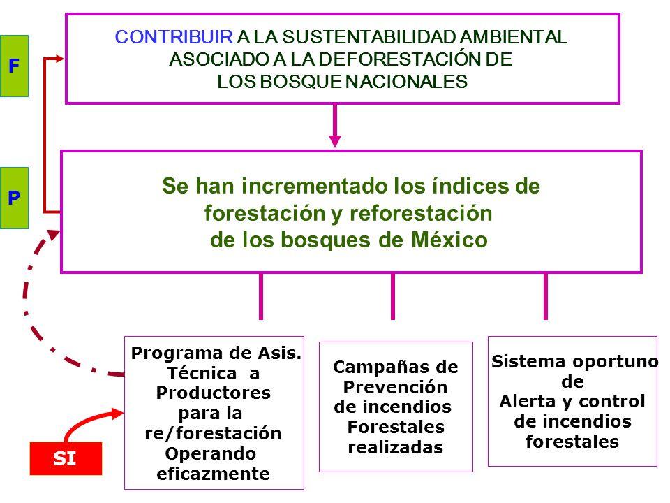 Se han incrementado los índices de forestación y reforestación