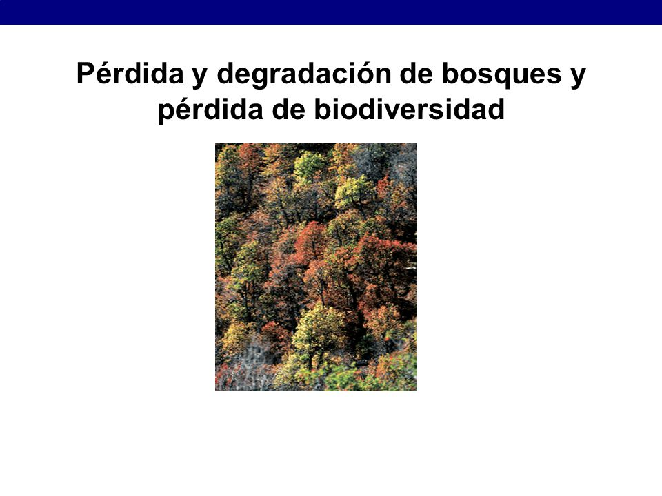 Pérdida y degradación de bosques y pérdida de biodiversidad