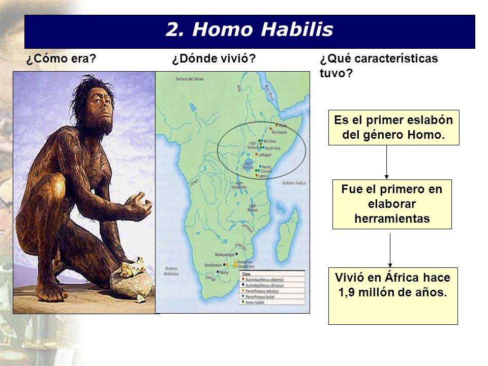 2. Homo Habilis ¿Cómo era ¿Dónde vivió ¿Qué características tuvo