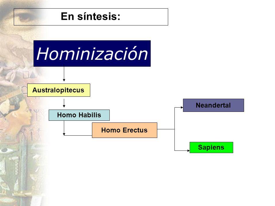 Hominización En síntesis: Australopitecus Neandertal Homo Habilis