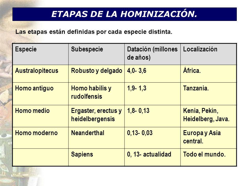 ETAPAS DE LA HOMINIZACIÓN.