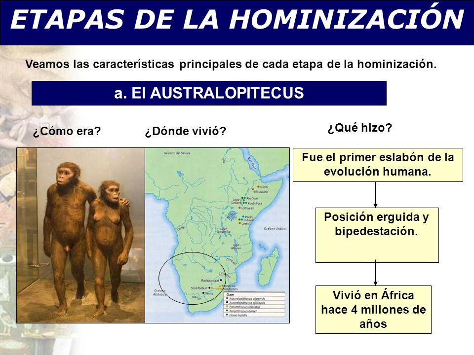 ETAPAS DE LA HOMINIZACIÓN