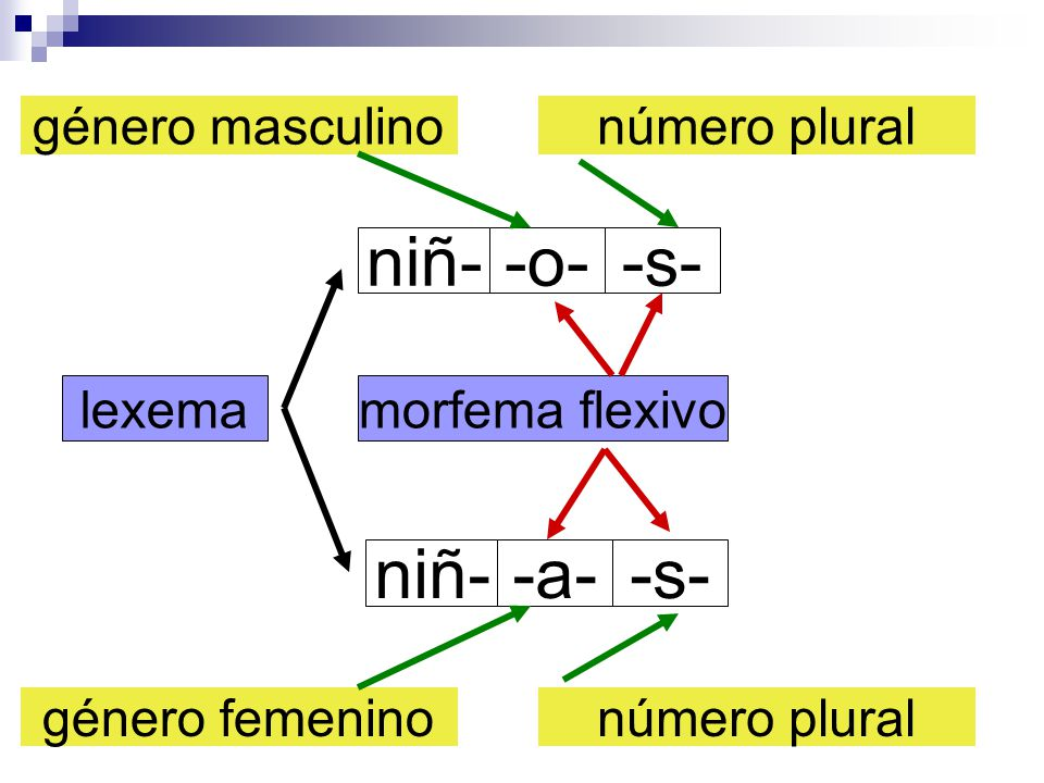 niñ- -o- -s- niñ- -a- -s- género masculino número plural lexema