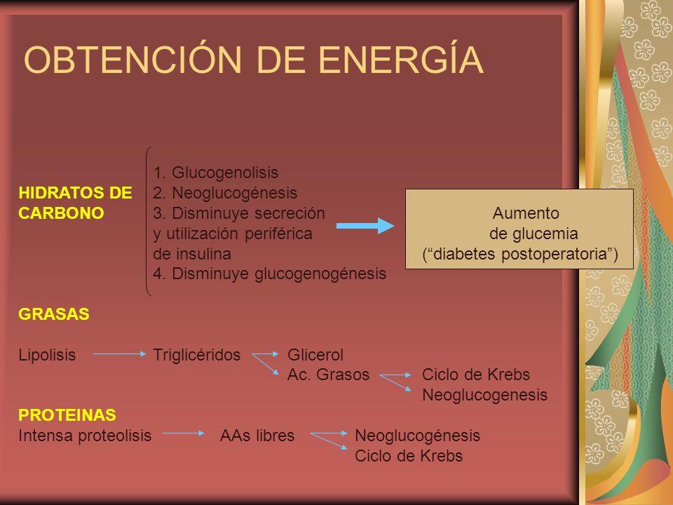 OBTENCIÓN DE ENERGÍA 1. Glucogenolisis HIDRATOS DE 2. Neoglucogénesis