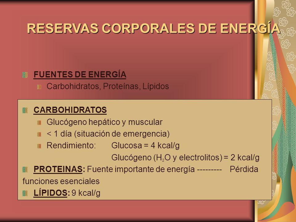 RESERVAS CORPORALES DE ENERGÍA