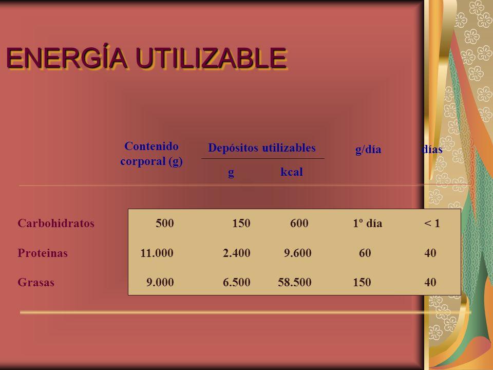 ENERGÍA UTILIZABLE Contenido corporal (g) Depósitos utilizables g/día
