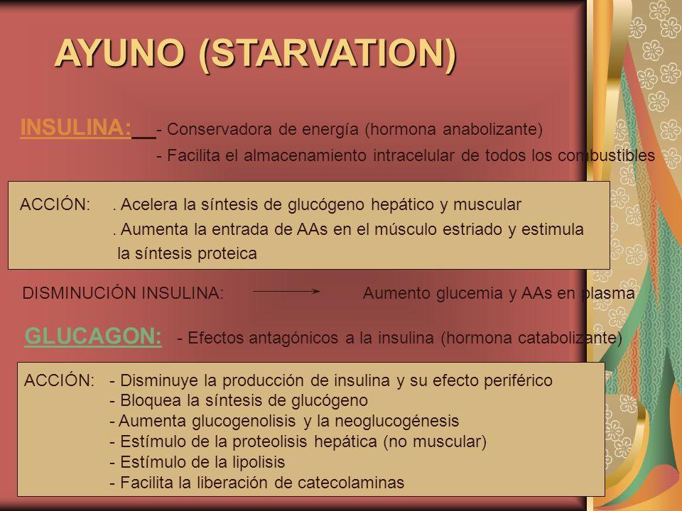 AYUNO (STARVATION) INSULINA: - Conservadora de energía (hormona anabolizante) - Facilita el almacenamiento intracelular de todos los combustibles.
