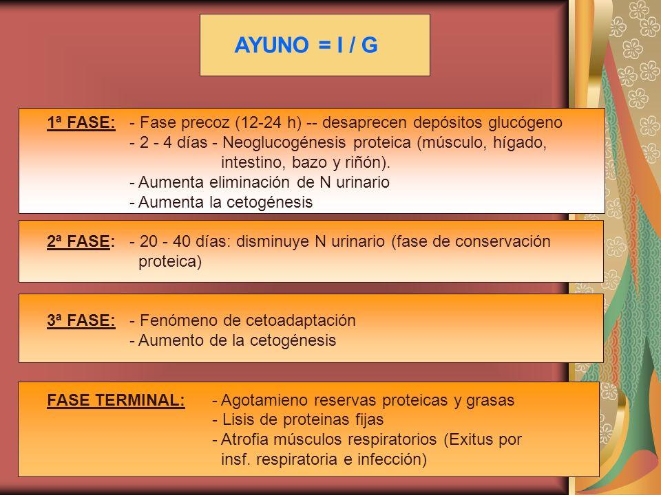 AYUNO = I / G 1ª FASE: - Fase precoz (12-24 h) -- desaprecen depósitos glucógeno. - 2 - 4 días - Neoglucogénesis proteica (músculo, hígado,