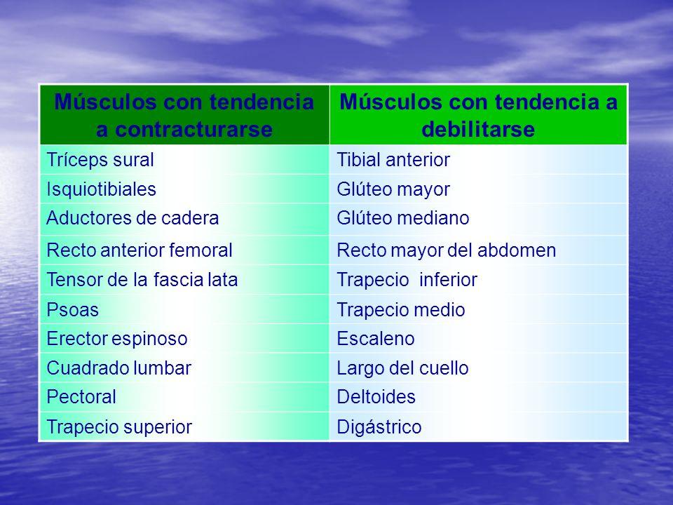 Músculos con tendencia a contracturarse