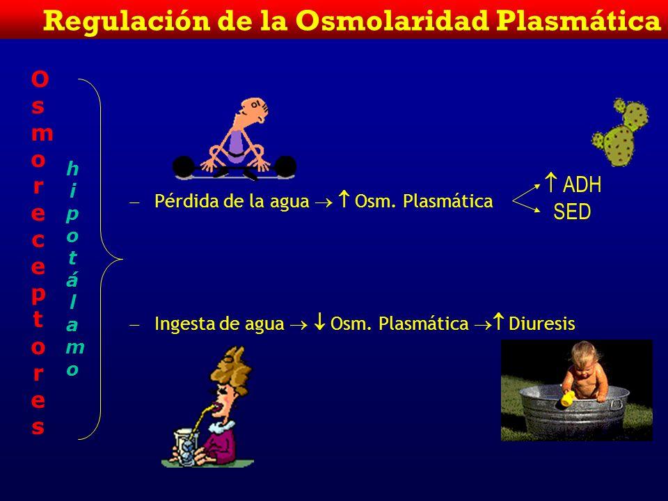 Regulación de la Osmolaridad Plasmática