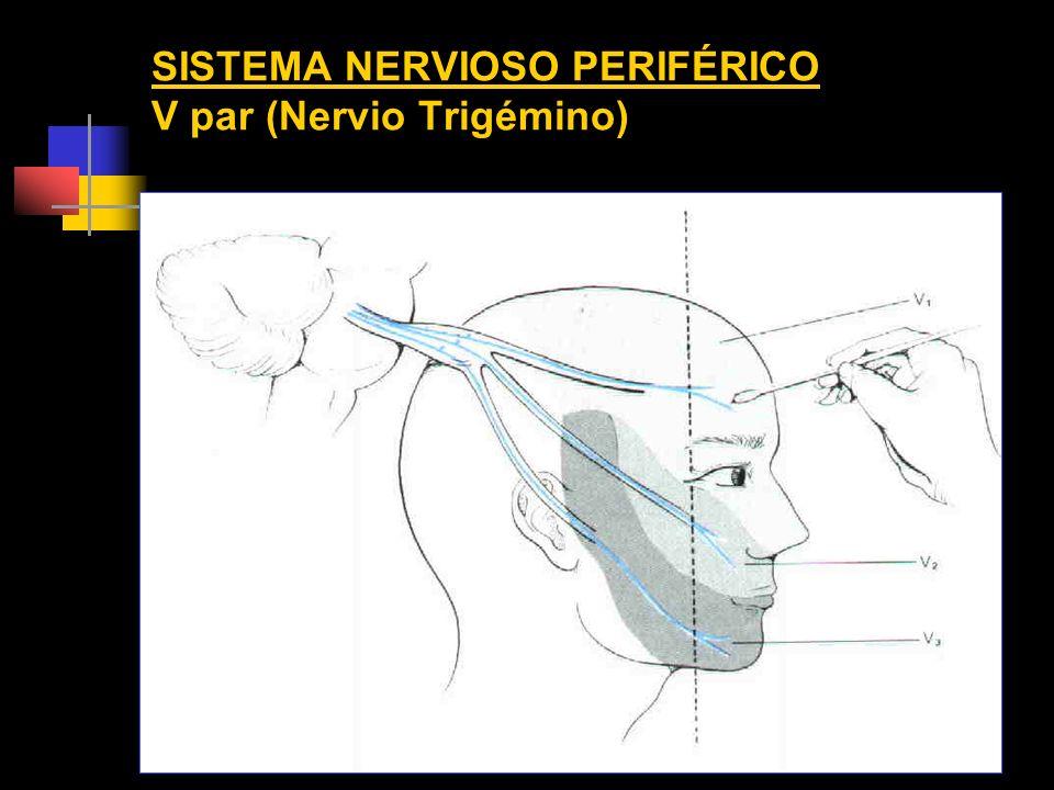 SISTEMA NERVIOSO PERIFÉRICO V par (Nervio Trigémino)