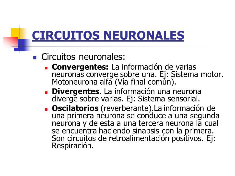 Circuito Neuronal : Sistema nervioso generalidades ppt video online descargar