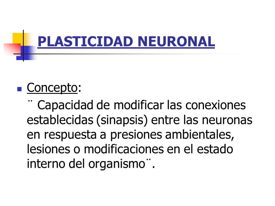PLASTICIDAD NEURONAL Concepto: