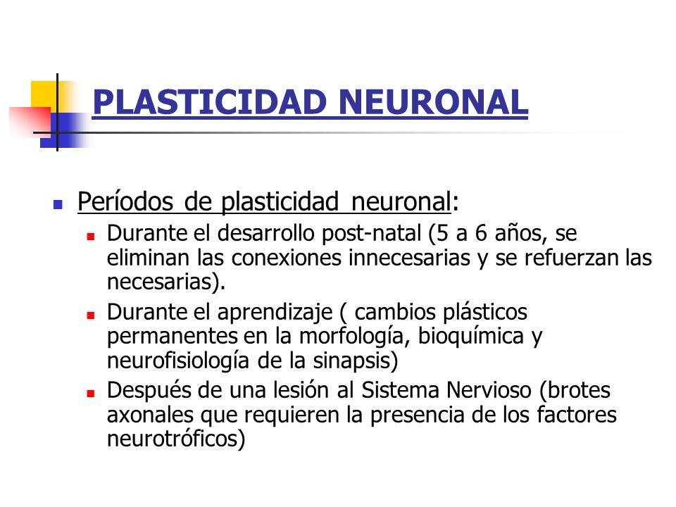 PLASTICIDAD NEURONAL Períodos de plasticidad neuronal: