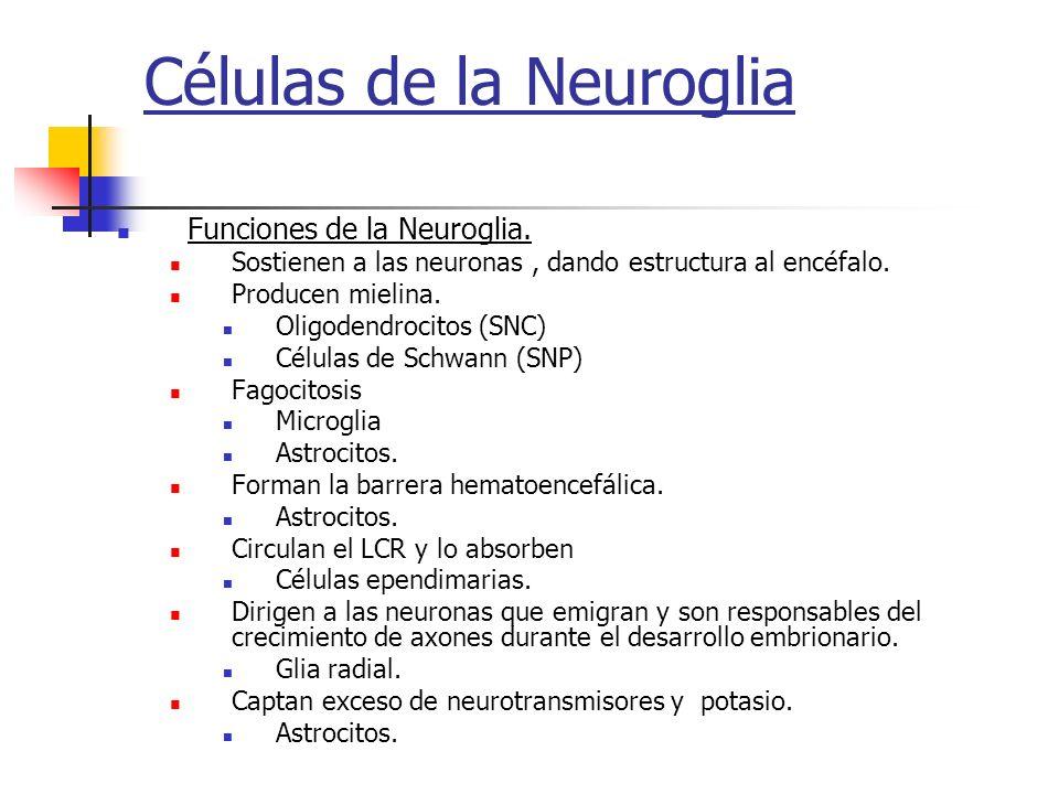 Células de la Neuroglia