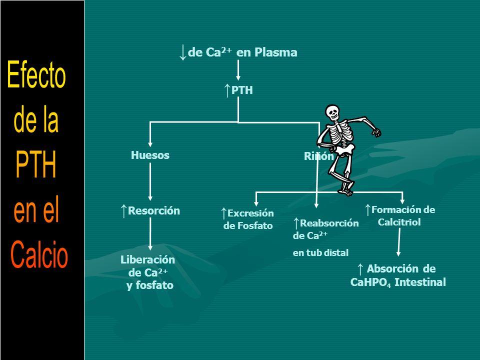 Efecto de la PTH en el Calcio ↓de Ca2+ en Plasma ↑PTH ↑Resorción