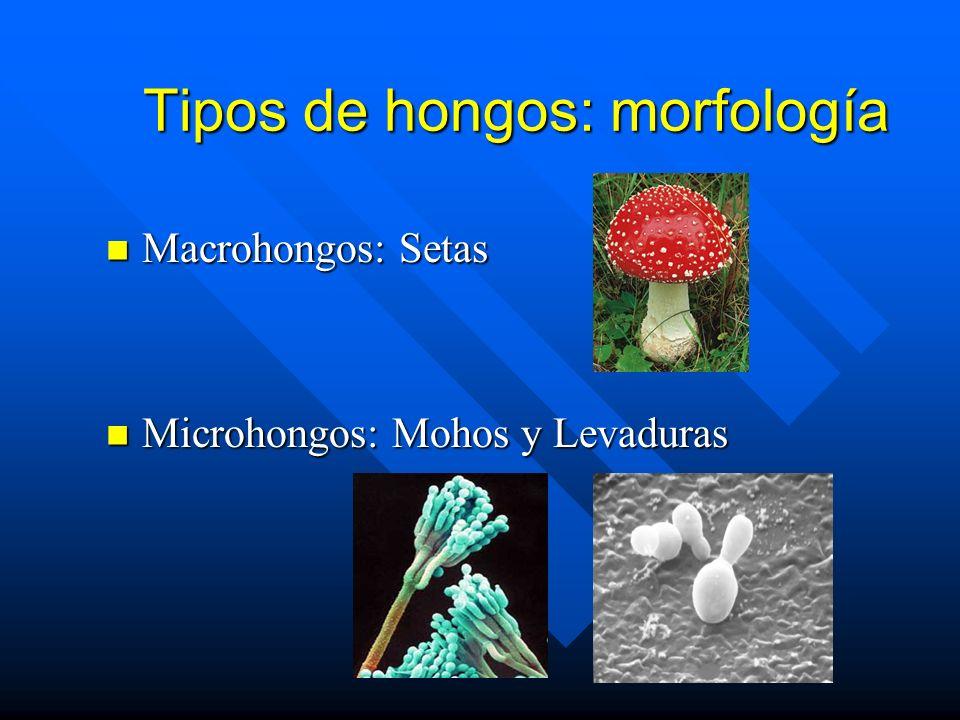 Tipos de hongos: morfología