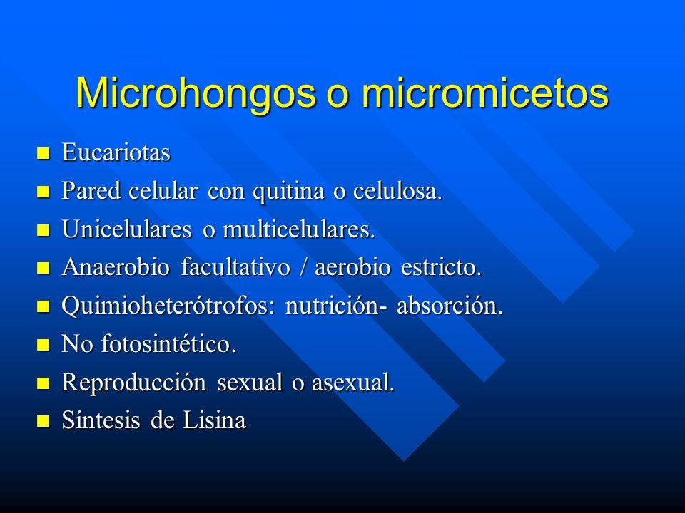 Microhongos o micromicetos