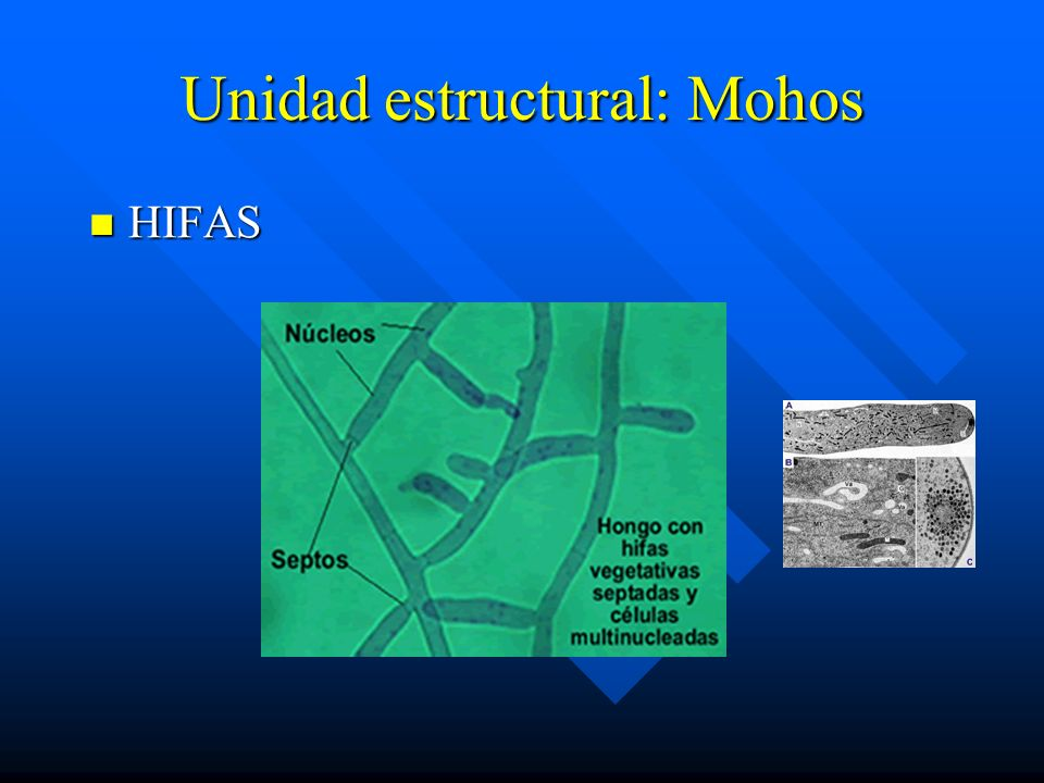 Unidad estructural: Mohos
