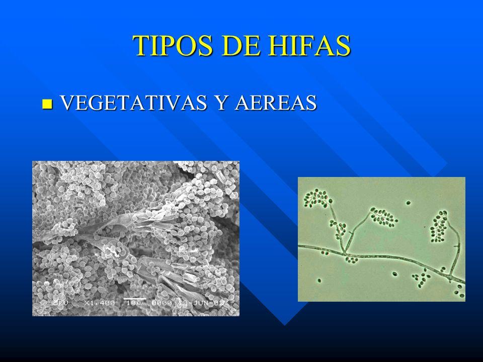 TIPOS DE HIFAS VEGETATIVAS Y AEREAS