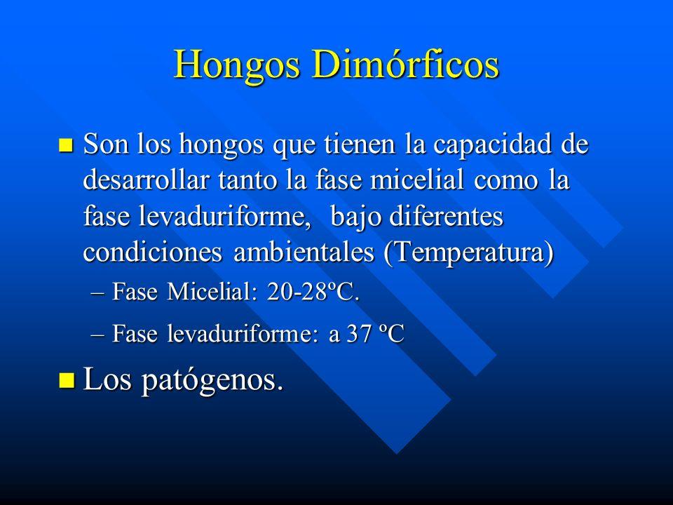 Hongos Dimórficos Los patógenos.