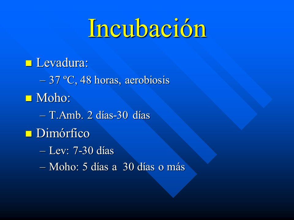 Incubación Levadura: Moho: Dimórfico 37 ºC, 48 horas, aerobiosis