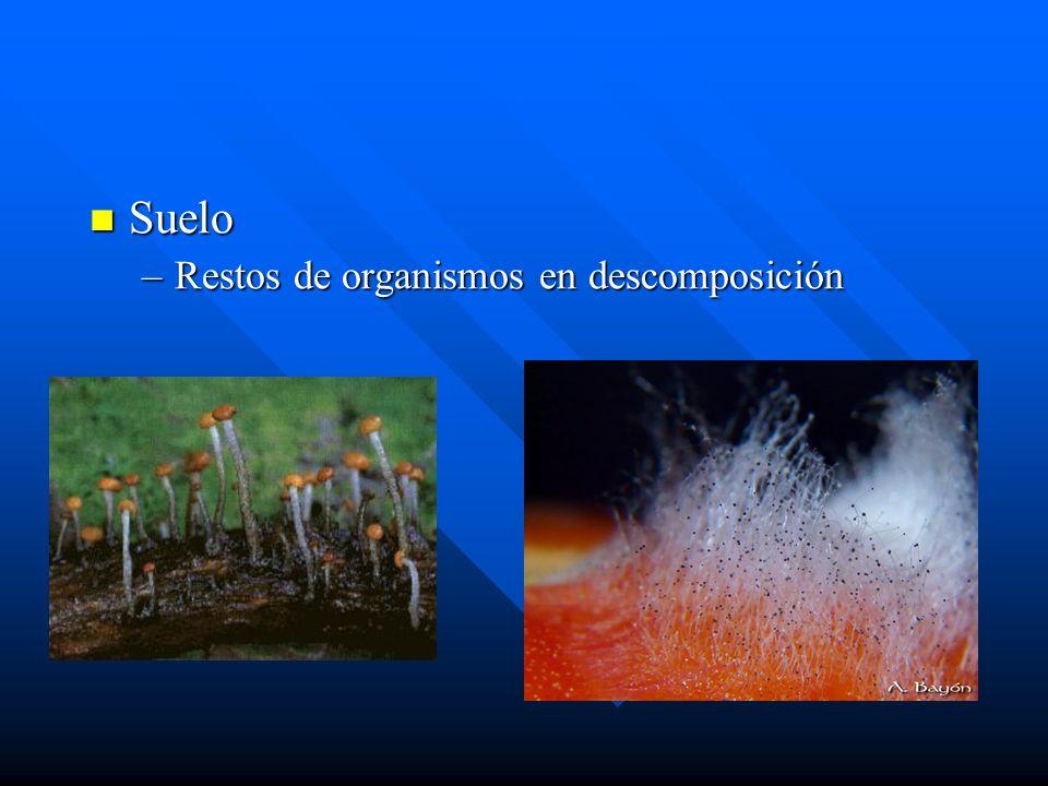 Suelo Restos de organismos en descomposición