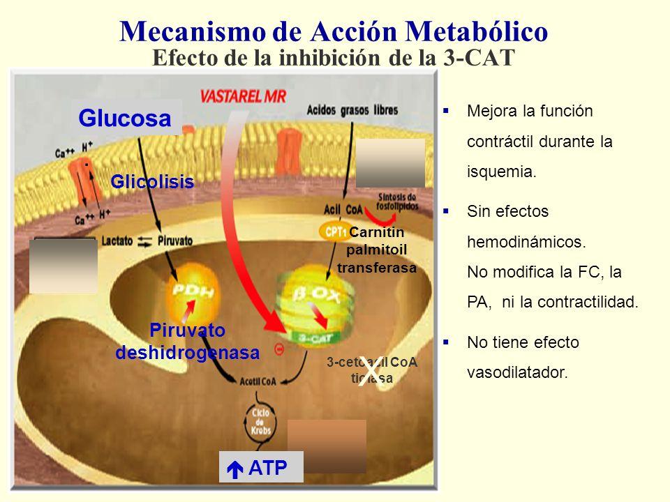 Mecanismo de Acción Metabólico Efecto de la inhibición de la 3-CAT