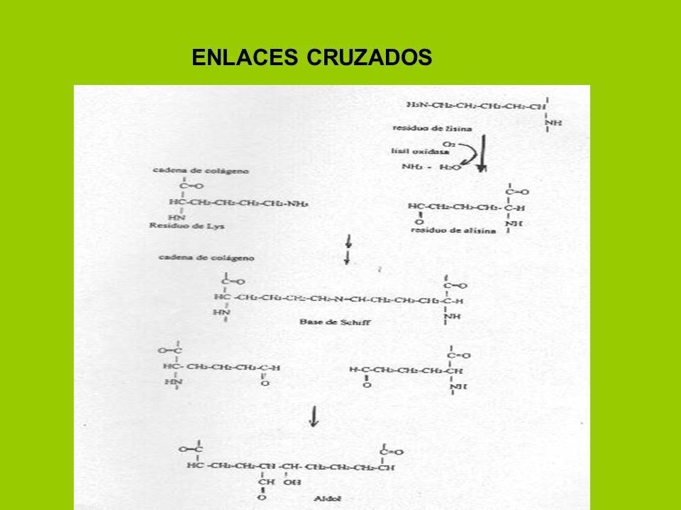 ENLACES CRUZADOS
