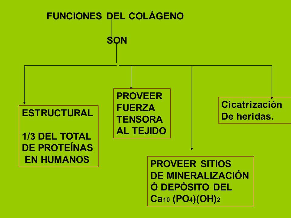 FUNCIONES DEL COLÀGENO